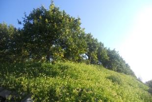 Rif. 275 – Terreno vicinanze Vendicari