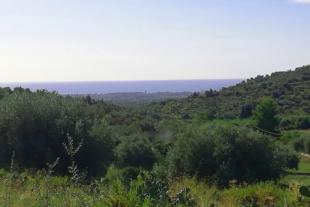 RIF. 542 – L'ULIVETO FIUMARELLA